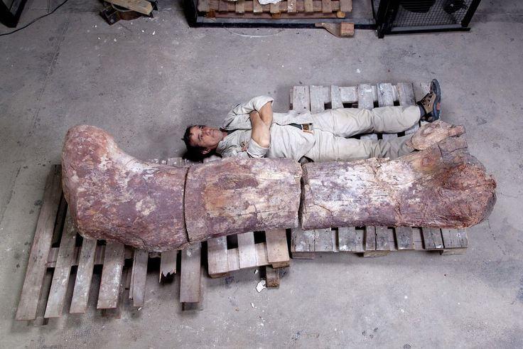 The 15 Most Magnificent Dinosaur Discoveries Of 2014