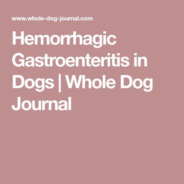 Hemorrhagic Gastroenteritis in Dogs   Whole Dog Journal