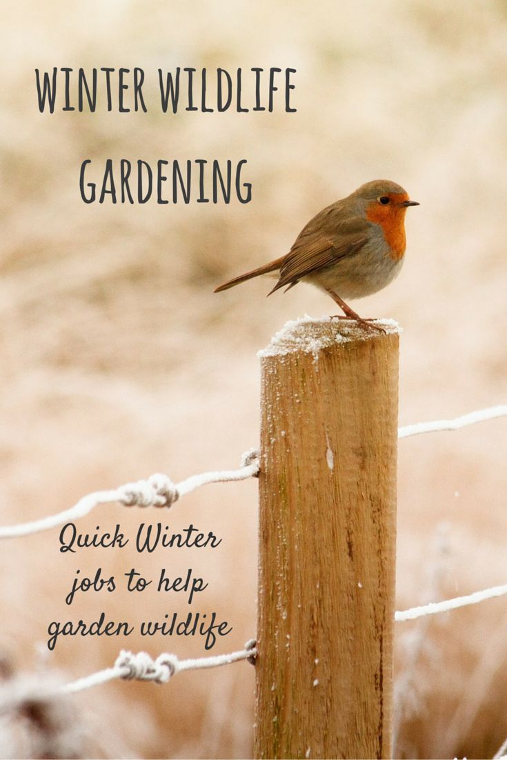 Wildlife gardening jobs for Winter with the 10 minute gardener: ideas for quick gardening tasks that will really give local species a helping hand.