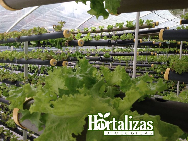 17 best images about hidroponicos on pinterest gardens for Hydro gardens