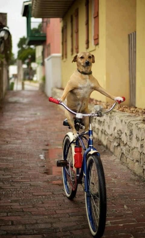 Image result for dog riding bike