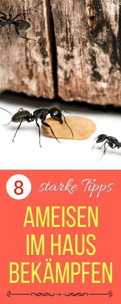 Ideal Ameisen im Haus bek mpfen