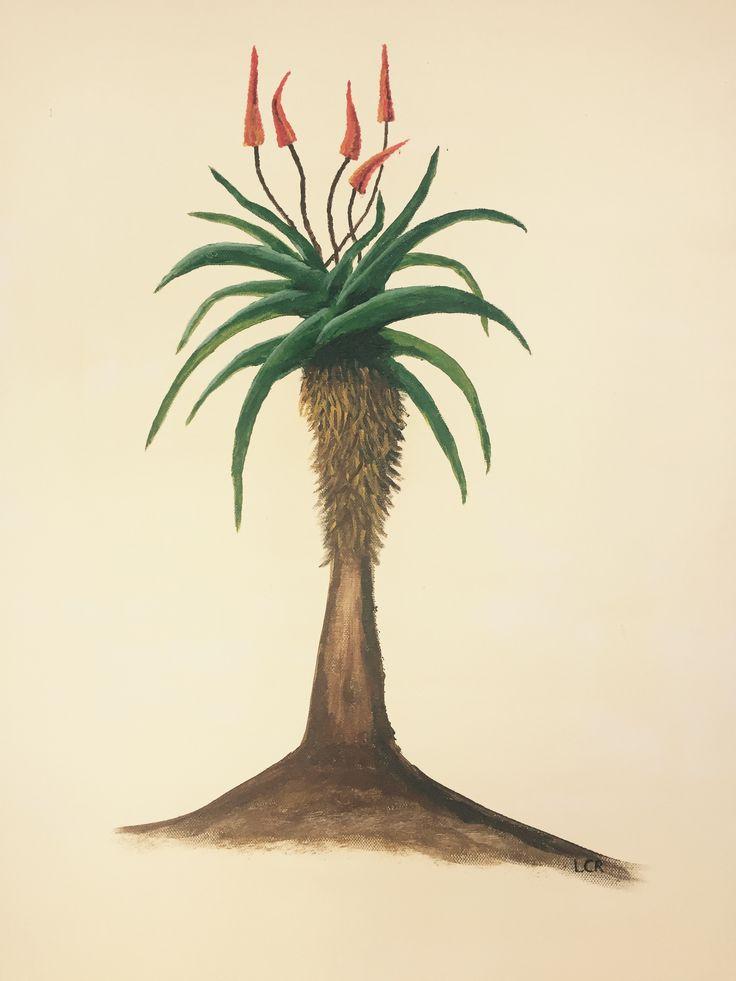 Mary's Aloe