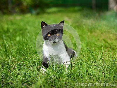 Little black kitten in a grass .