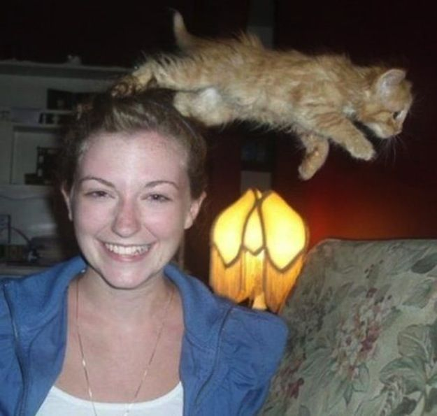 Best Animal Photobombs Images On Pinterest Funny Animals - 35 hilarious animal photobombs ever