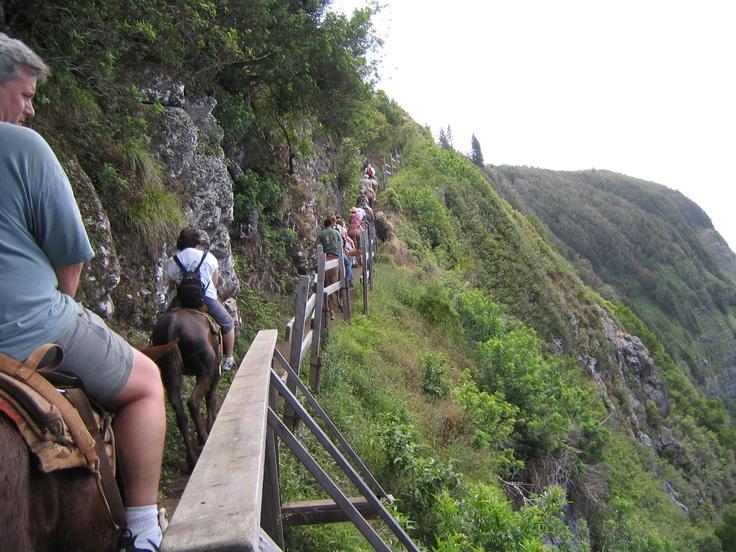 Mule Ride In Kalaupapa Molokai Hawaii Gt Waooow