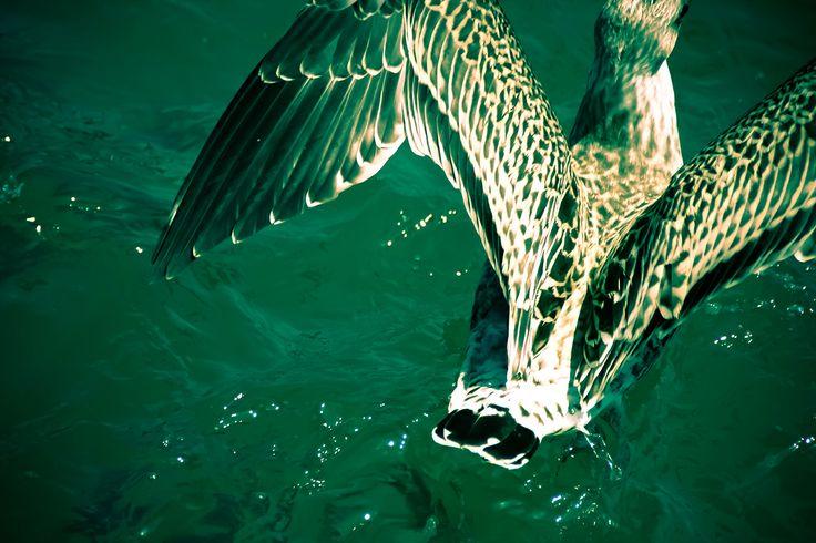 photography © Àlex Reig 2014 #photography #bird #art #seagull