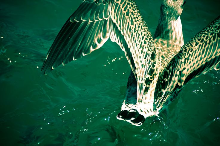 photography © Àlex Reig 2014 #photography #bird #art #seagull