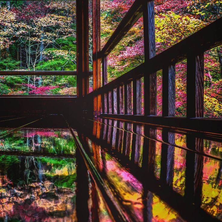 紅葉の季節といえば、思い浮かべるのが京都の紅葉。そんな京都の中でも、辺り一面が真っ赤に染まる大人気の紅葉名所「瑠璃光院(るりこういん)」をご存知ですか?今回はそんな京都屈指の絶景スポットの素敵な紅葉情報をご紹介。人生で一度は見ておきたい、美しき秋の絶景ですよ!