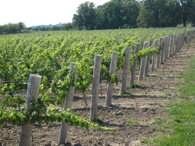 Cooper's Hawk Vineyards