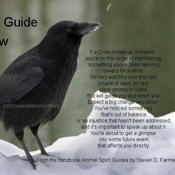 Crows meaning....
