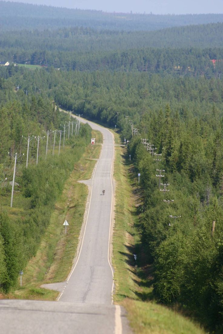 Reindeer highway