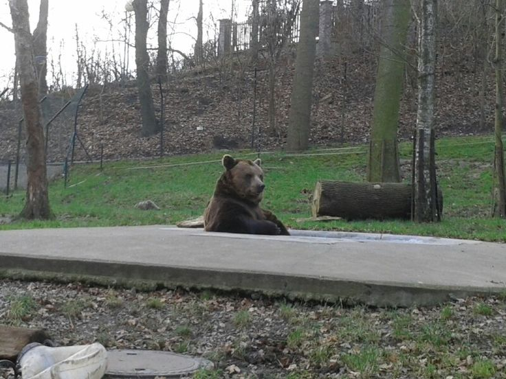 Medvedarium Beroun