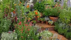 medicinal herb garden designs - Google Search