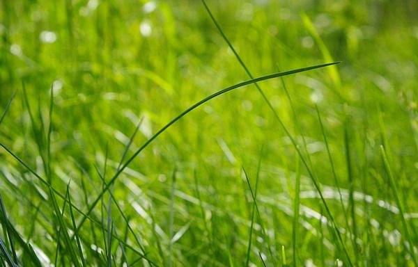 Электроточприбор: Светодиодный светильник в форме травы