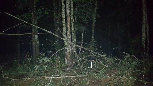 A Bigfoot sighting in North Carolina causes police in a nearby South Carolina town to issue a warning.