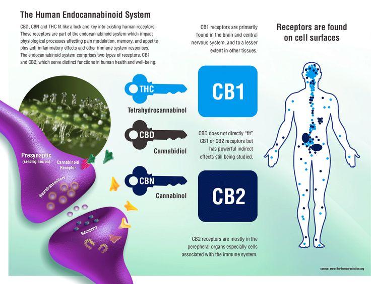 Cannabis Education 101