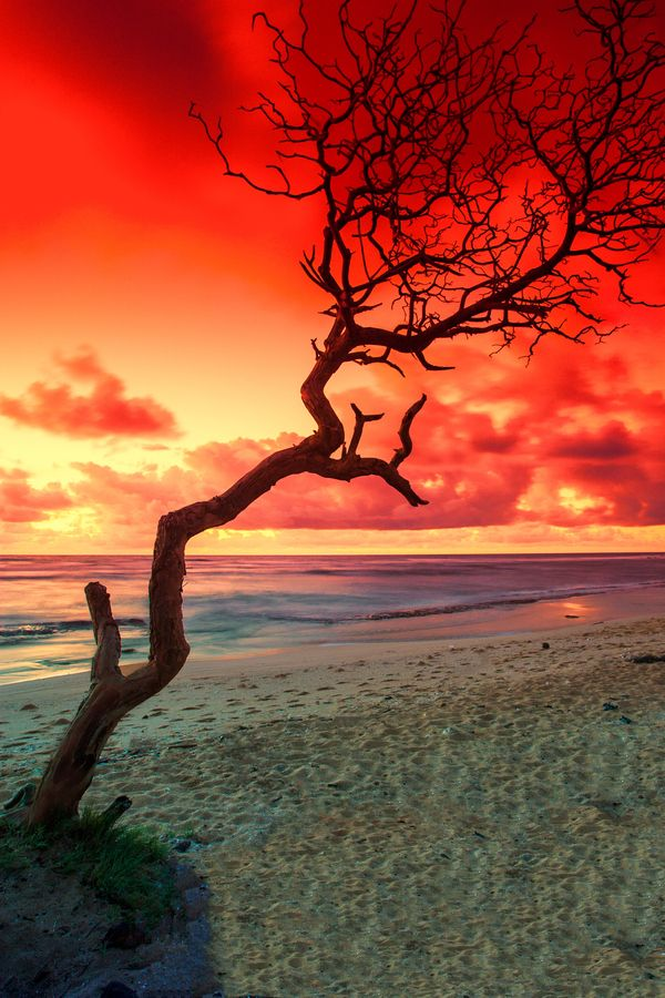✯ Morning Solitude, Hawaii.