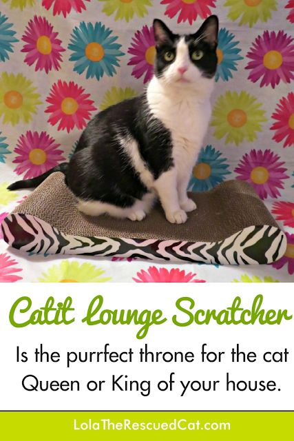 Lola The Rescued Cat: The Catit Lounge Scratcher is Purrfect for Feline Royalty #ChewyInfluencer