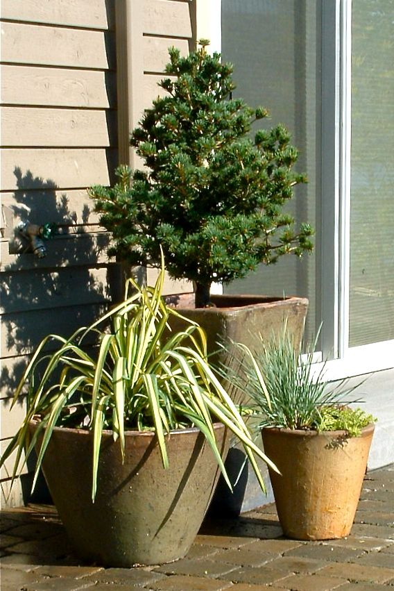 99 best Gardening images on Pinterest Garden ideas Plants and