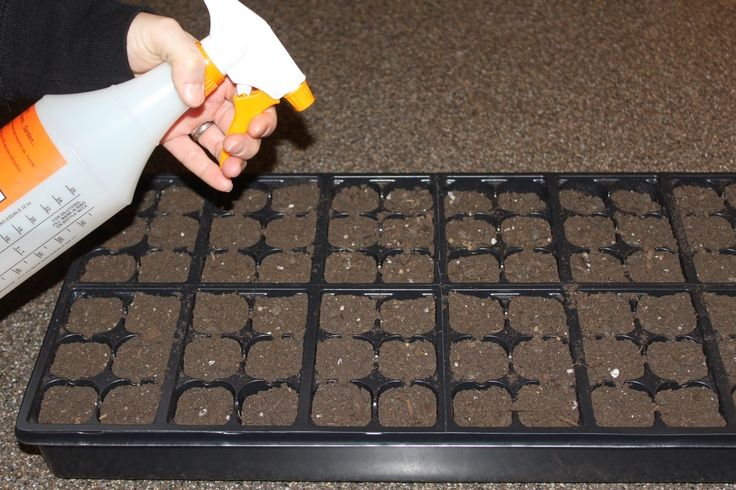 Helpful Hints On Starting Seeds Indoors