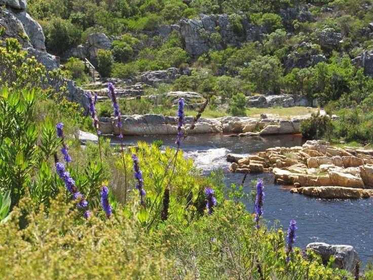 Kleinmond - South Africa