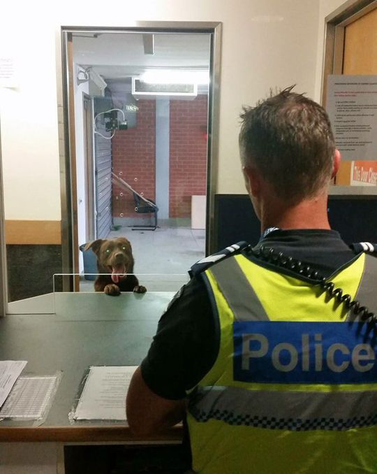Yes officer, I'd like to report a crime. He made a motion like he threw the ball, but he really kept it in his hand.