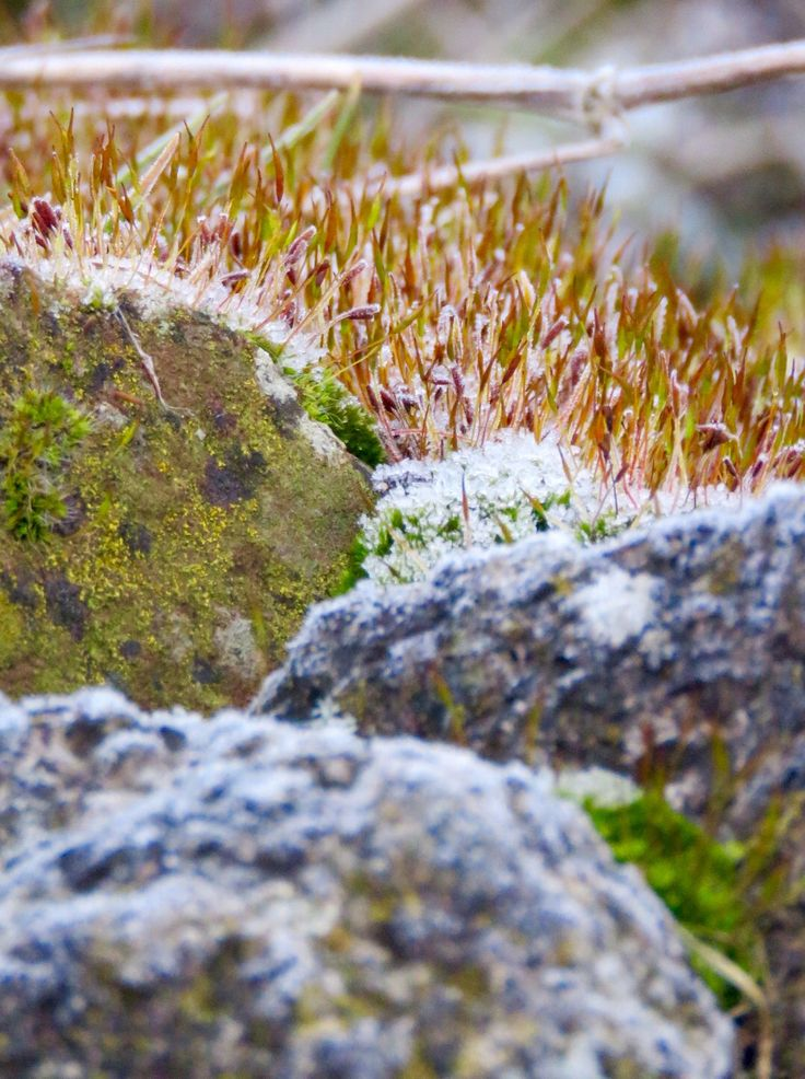 Frost & moss on stone