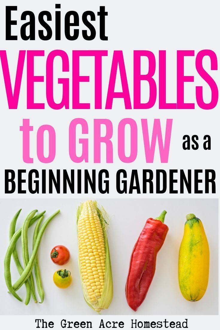 Easiest vegetables to grow as a beginning gardener. Take my advice and grow thes…