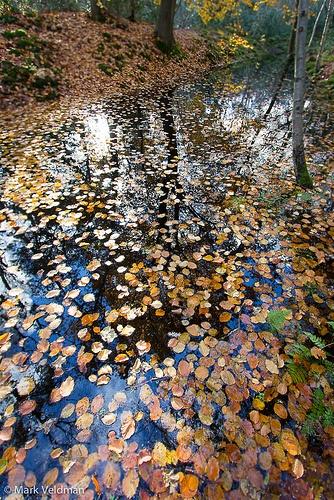 Golden leafs