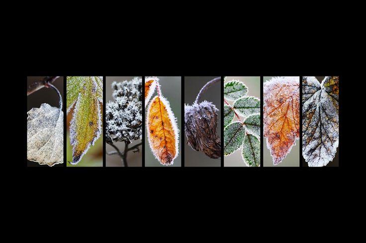 Diferentes tipos de hojas de árboles