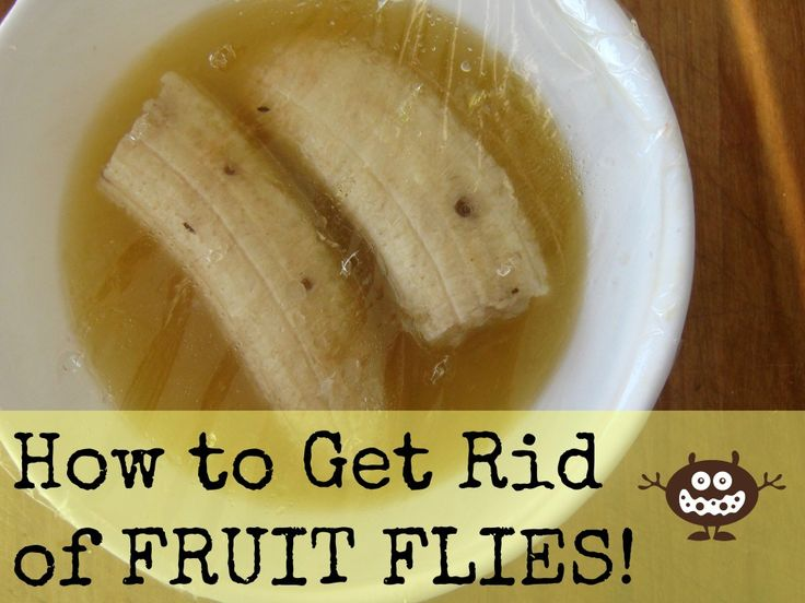 The EASIEST Way to Get Rid of Fruit Flies | Our Nourishing Roots (it's that time of year!)