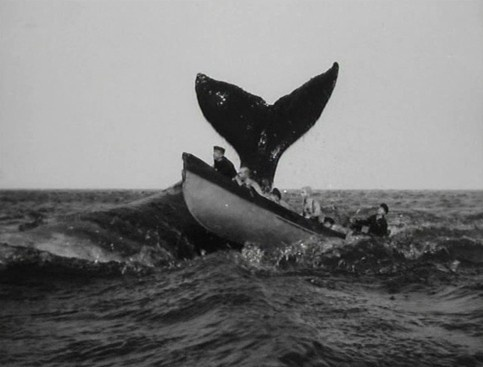 early century whaling