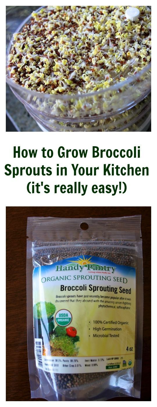 How to Grow Broccoli Sprouts in Your Kitchen from Carrie on Living | www.carrieonliving.com #sprouting #plantstrong #paleo