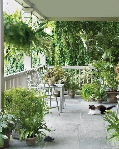 Decorating a porch with houseplants is a simple and effective way to make it a friendly and inviting place to gather, entertain, and even take a catnap. And from a distance, the plants do indeed make my home lovelier, the green foliage reiterating the greens of the gardens and terraces.: