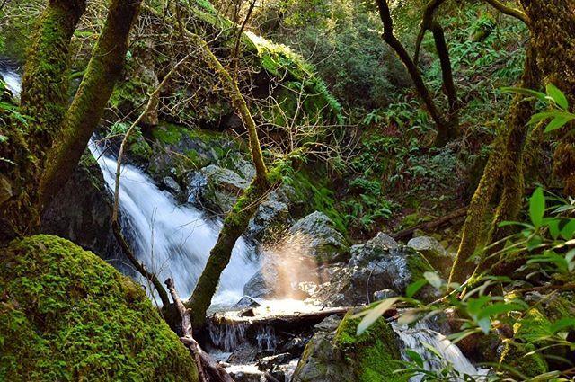 Sparks fly ✨ . . . . #california #norcal #sanfrancisco #igsf #westcoast #mttam #waterfall #rei1440project #neverstopexploring #theoutbound #agameoftones #liveauthentic #livefolk #travelgram #theoutdoorfolk #visualsoflife #createcommune #naturephotography #nps #stayandwander #wanderfolk #staywild #getoutdoors #roamtocreate #hiking #saytwowords #folkvibe #marincounty