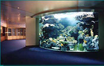 google image result for httpwwwaqdscomimagessecondaryproject3_1jpg aquarium pinterest aquarium i win and saltwater fish tanks aquarium office