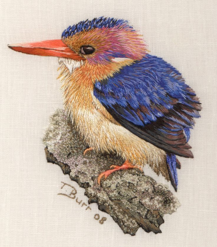 A magnificent pygmy kingfisher by trish burr from cape