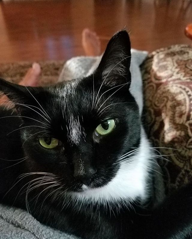 Hello human, may I help you? Katey Kat was relaxing until picture time. Submitted by: Linda Gray #cat