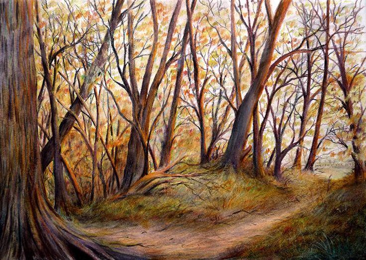 Colour Pencil Sketches Of Nature Woodland pencil sketch