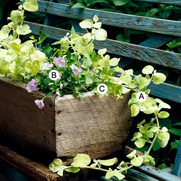 Change with the Seasons: Plant Ideas, Garden Ideas, Ivy Hedera, Azure Wing, Seasonsa Rustic, Container Gardening, Arrangements