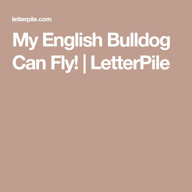 My English Bulldog Can Fly! | LetterPile