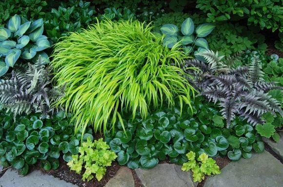 Japanese forest grass ajuga hostas s h a d e for Oriental grass plants