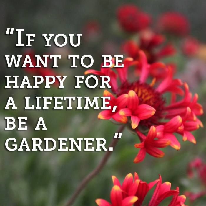 17 Best Gardening Quotes on Pinterest Garden quotes Secret
