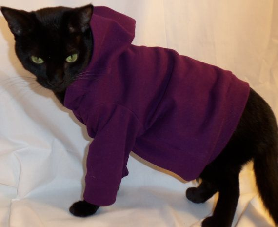 not usually a fan of dressing up animals.... but for a hoodie for cats.... I'll make an exception
