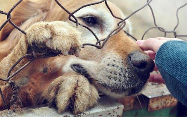 ### VICTORIA!! EEUU. Las tiendas de mascotas en Chicago ahora tienen que ofrecer animales de refugios, no de criaderos.