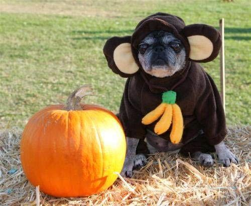 101 mascotas : 6 disfraces super tiernos para perros pequeños
