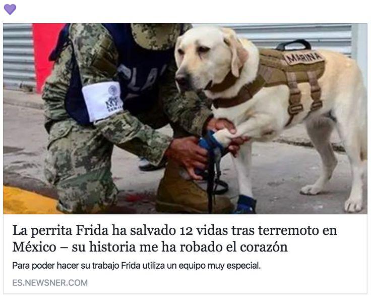 Entre los héroes que hemos conocido esta semana, pocos nos han arrebatado el corazón como Frida.