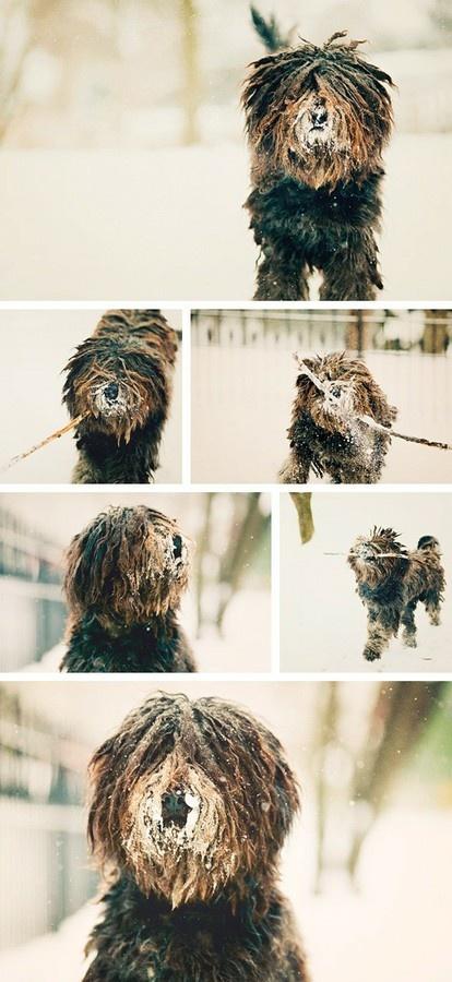 Bergamasco Sheep Dog #sheepdog #god #bergamasco #snow patricemitchell