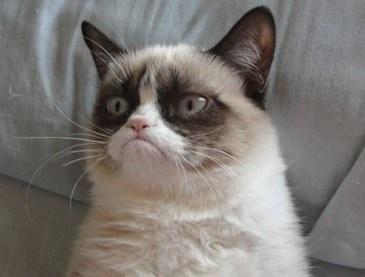 Grumpy Cat-Serial Complainer - #customer service tips!